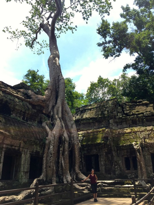 Roots of a Spung tree sprouting from the middle of an ancient temple