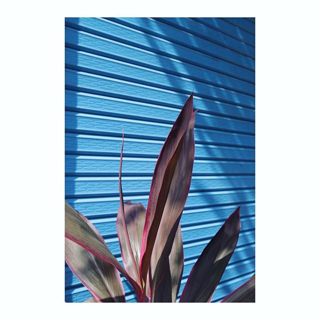 Thailand colours . . . . . . . #thailand #blue #instagood #travelphotography #instadaily #shadowhunters #shadowplay #plantsofinstagram