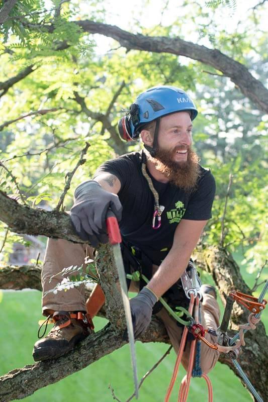 Arborist-on-Branch.jpg