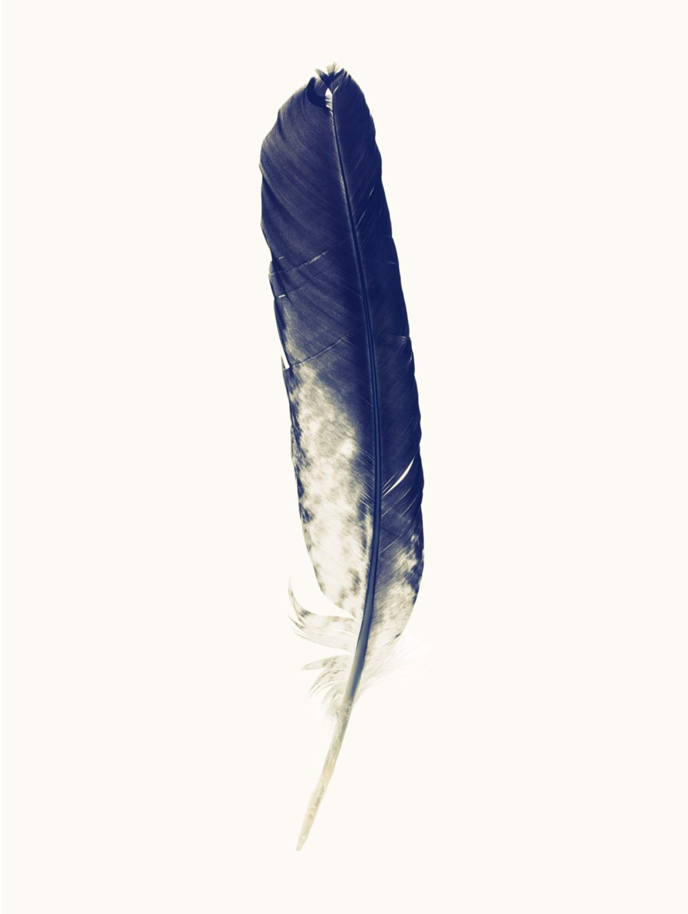 "Lyle Owerko, ""Eagle Hunter Feather 5"" 2015. Edition of 9 + 2 AP's. Giclee on textured fine art paper. 32 x 44 in."