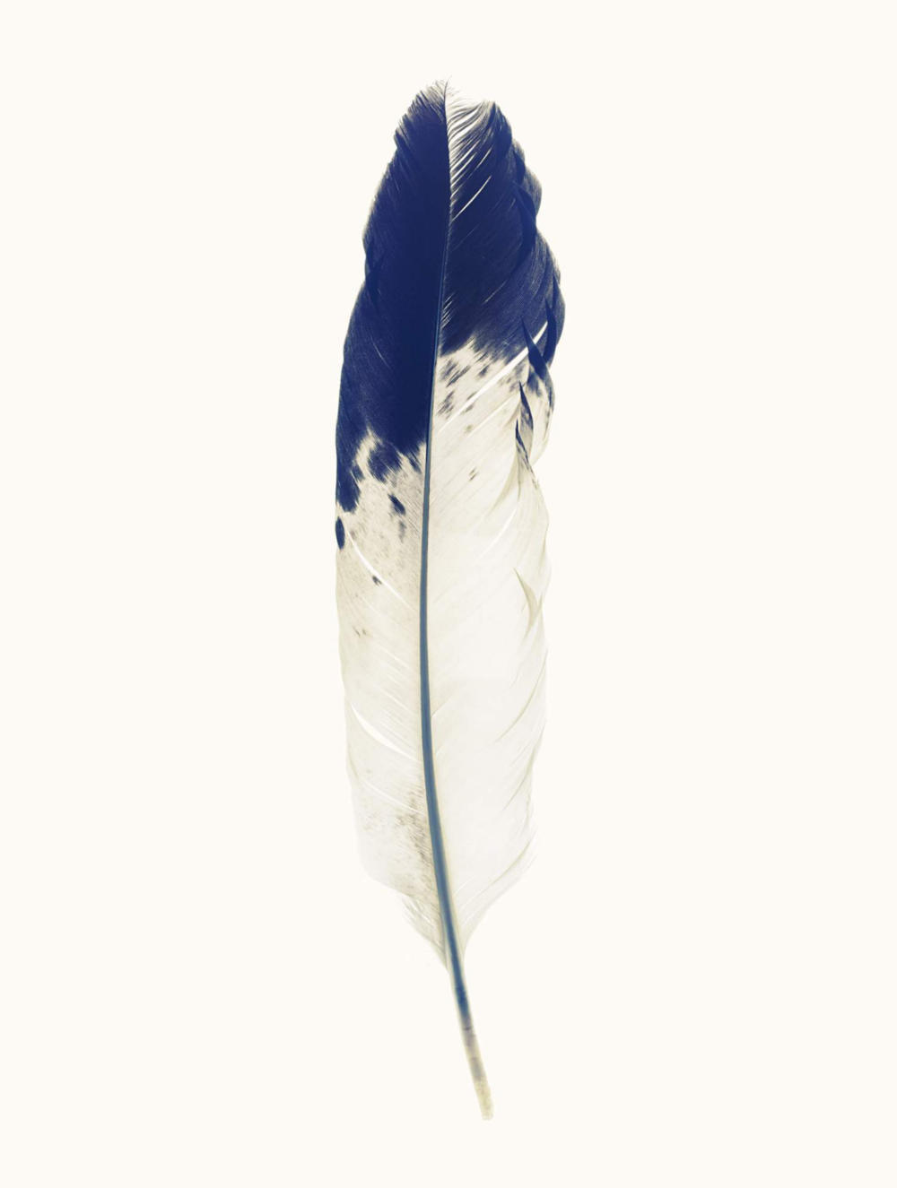 "Lyle Owerko, ""Eagle Hunter Feather 2"" 2015. Edition of 3 + 2 AP's. Giclee on textured fine art paper. 60 x 90."