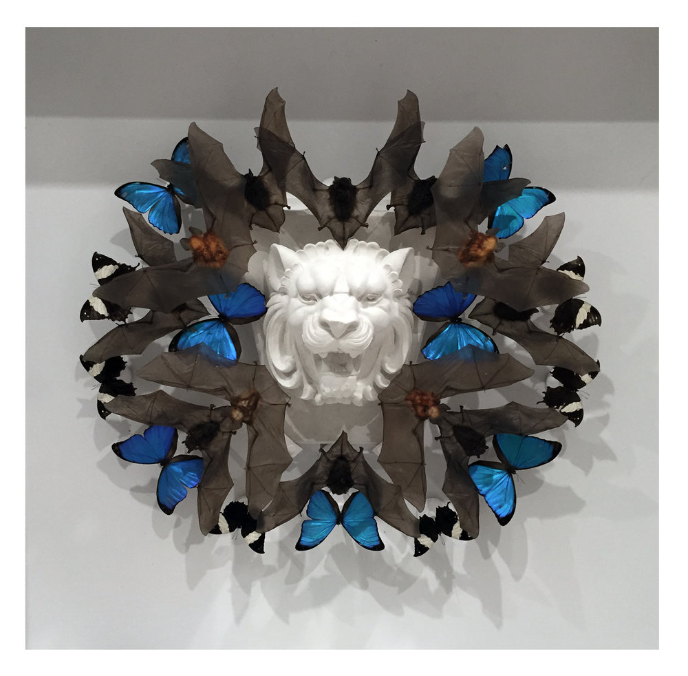 "Joseph Grazi, ""Mufasa"" 2016. Taxidermy bats, dried butterflies, and stone sculpture on wood mounted in plexiglass. 34"" x 34"" x 8""."