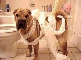 dog tissue