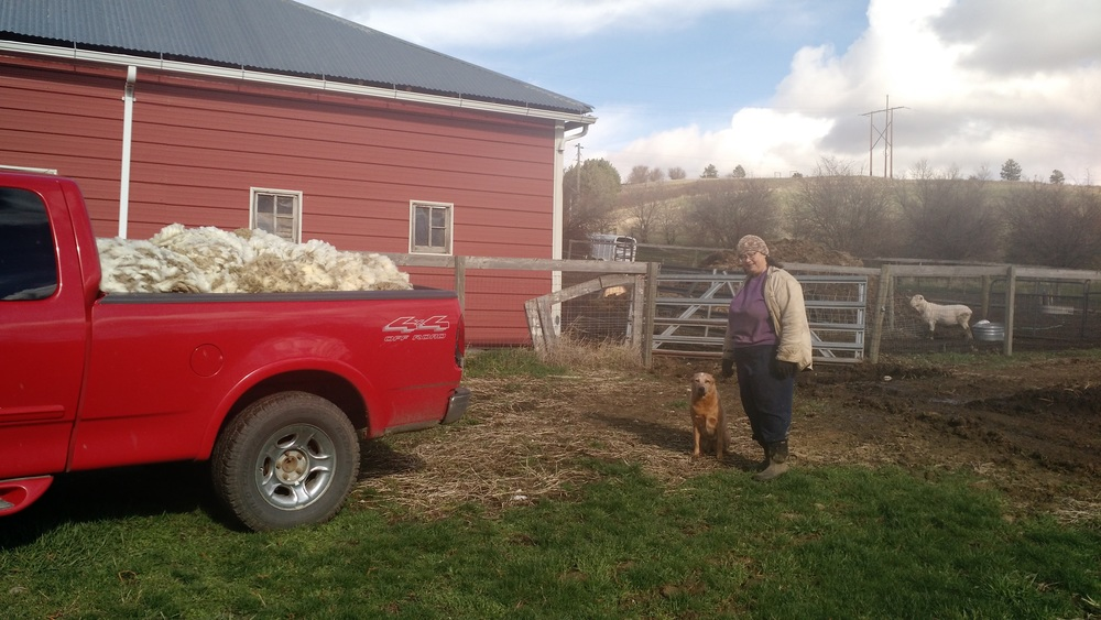 Bev, her heeler, and a pickup load of fresh fleece