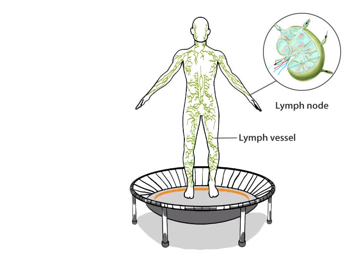 0097-lymphatic-system-re.png