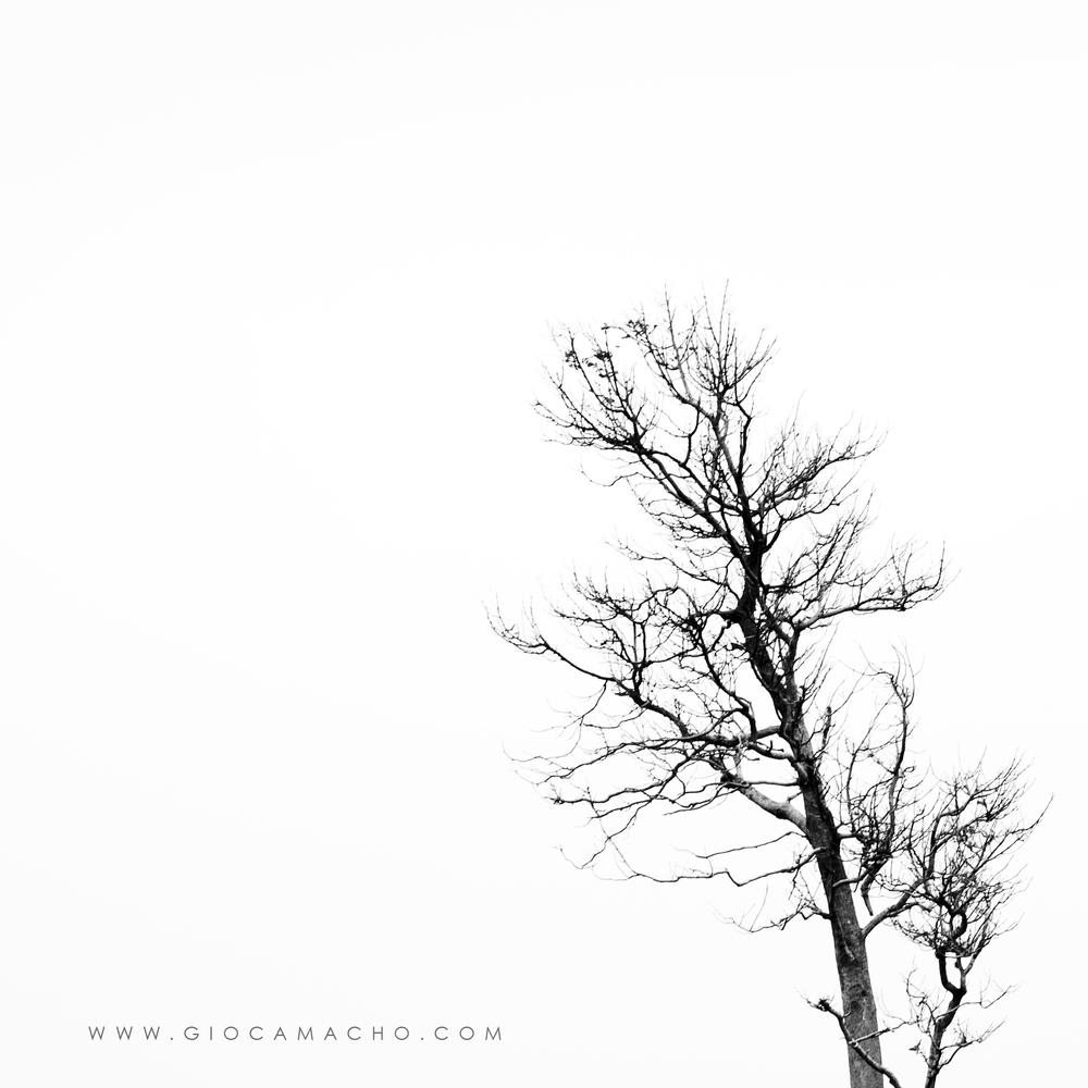 minimalist tree.jpg