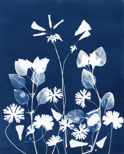 Botanical Cyanotype Photogram