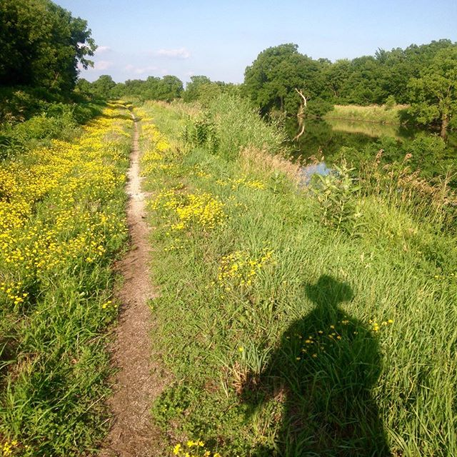@hennepin100 course measurement ride on the 104-mile Hennepin Canal State Trail. What a beautiful wreck you are.... Or another song reference: this was an 8 ft. path, now it's all covered in daisies. (You got it/you got it)....
