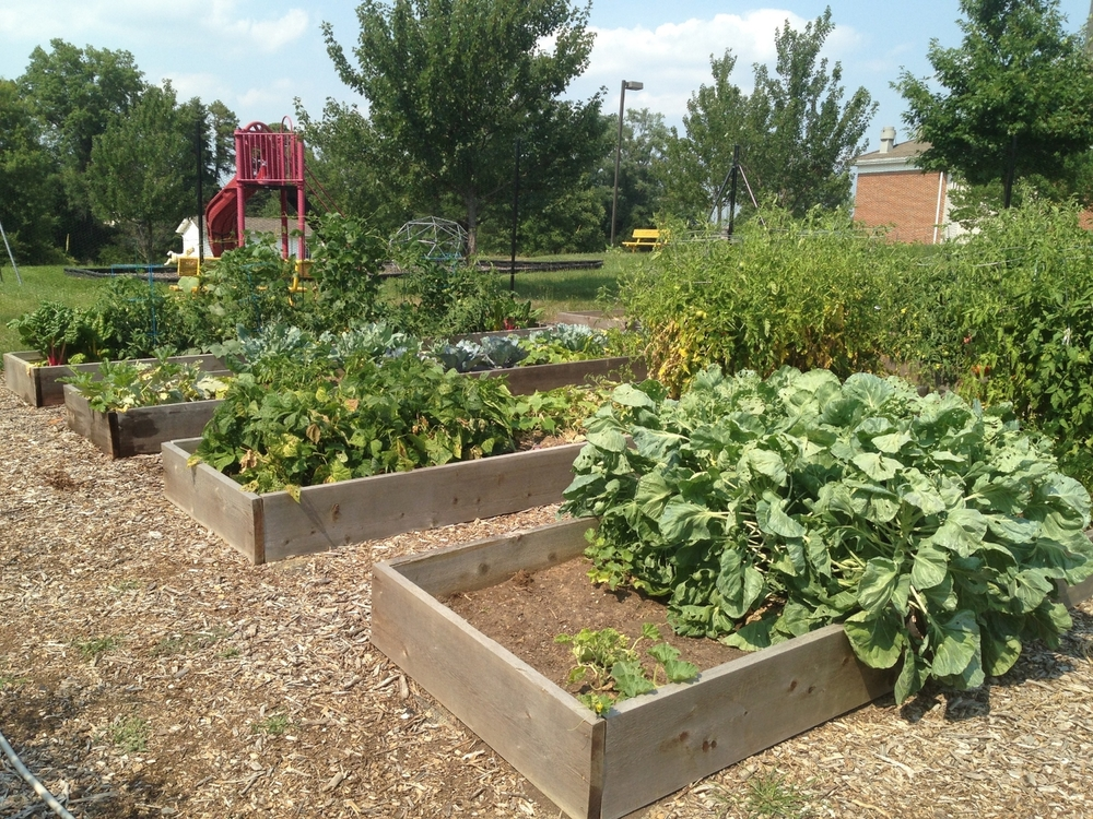 Deer Free, All natural, community garden at Dayspring Baptist