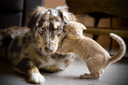 - Canine Foster Family Coordinator:   Bonnie Moore - 270.537.5586Feline Foster Family Coordinator:    Laura Clement - 270.524.4642