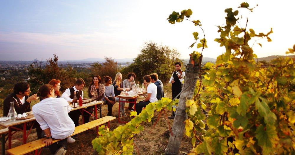 Vienna Wine Hiking Day