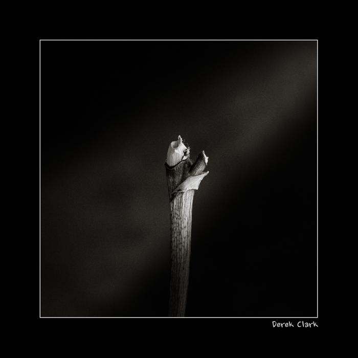 DerekClarkPhotography.com-Branch