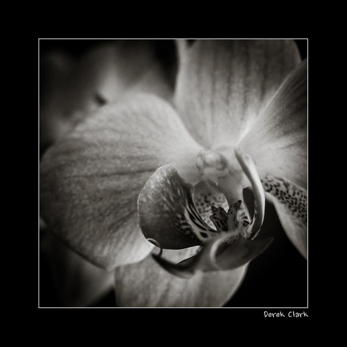 DerekClarkPhotography.com-Flower2