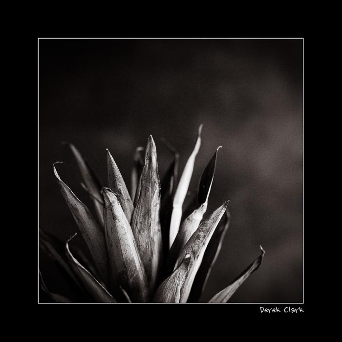 DerekClarkPhotography.com-Pine1