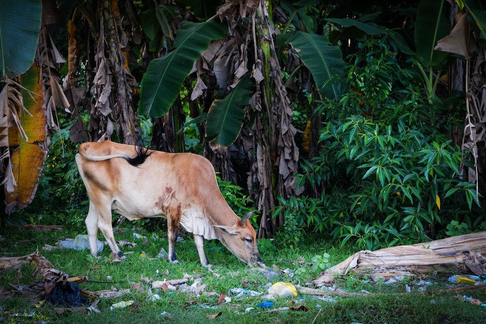 012_DerekClarkPhoto-Philippines.jpg