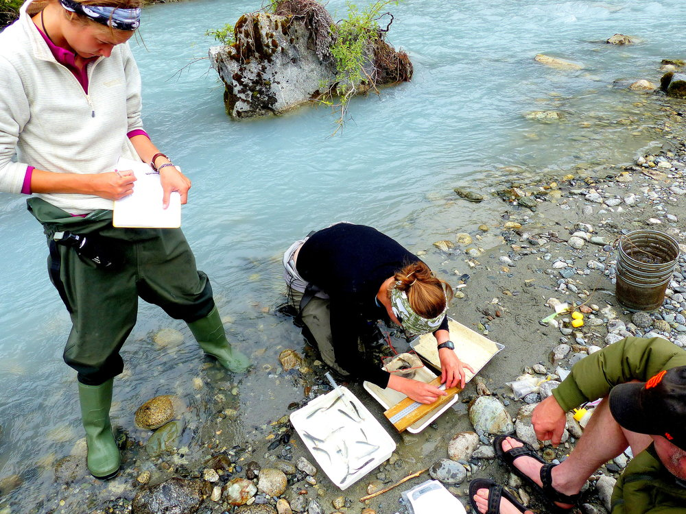 Leoni Clitherow and Jessica Piken measure young salmon beside a Glacier Bay stream that didn't exist until about 50 years ago.