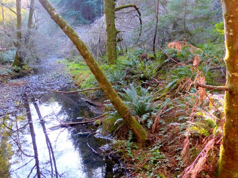 Redwood Creek salmon spawning beds starved for water by the extended drought.