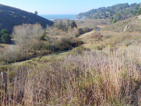 Overlooking the restored Redwood Creek estuary.