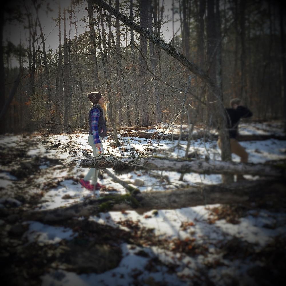 snowy-woods.jpg