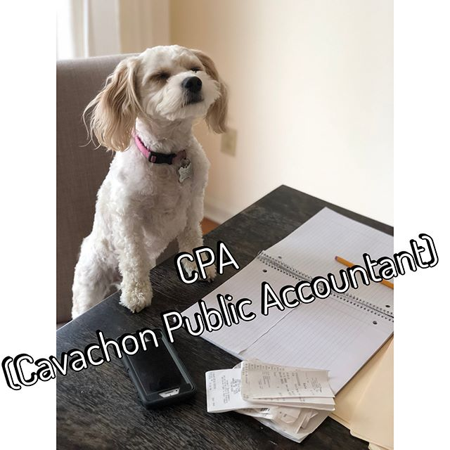 If anyone needs a recommendation for a really good CPA, I'm happy to recommend my girl! 🐶📈📁 She's really good and affordable! Works for Treats and Belly rubs 😛😉😉