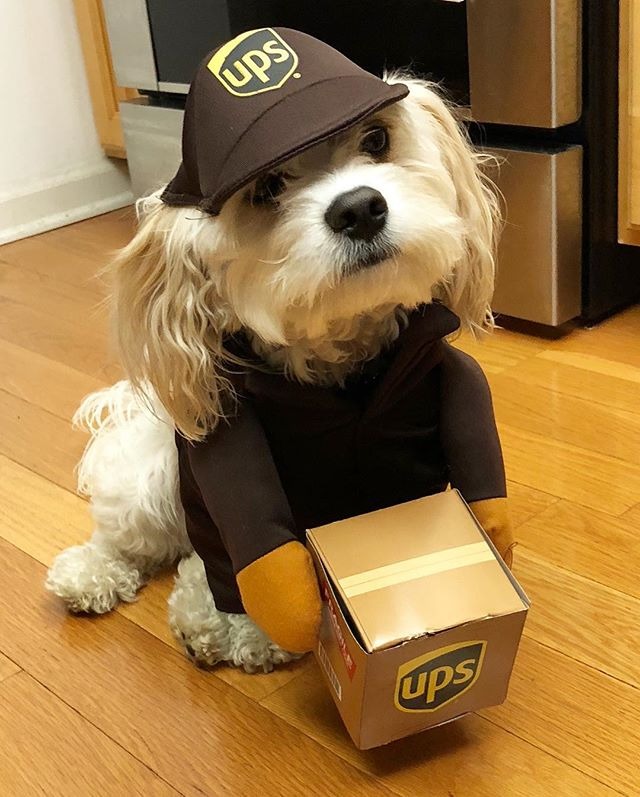 UPS driver just dropped off the packages 📦, what a cutie 😜🐶