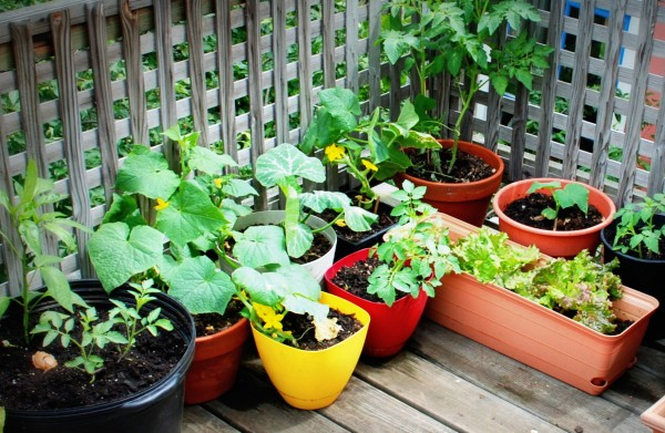 MeatlessMonday_Garden_Fruit_Vegetables-TheWiseLatinaClub-NatalieFierro