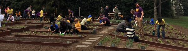 Students gardening in the White House Garden.