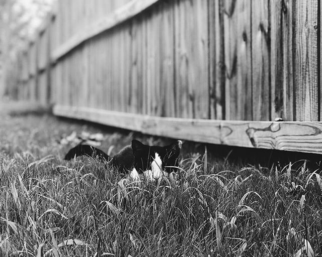 This is HoodCat. HoodCat always finds the perfect moments to sneak up on. . . Day 2/7 days. 7 black and white photos of your life. No humans. No explanations. Challenge someone new every day. Challenged by 💕 instagramless Nina and now challenging @waffelhaus_ . I wanna see B/W photos of Prague.  #blackandwhite  #photo #challenge #cat #catsofinstagram