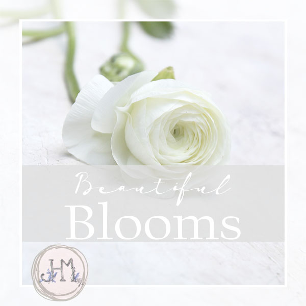 pinterest board cover beautiful blooms.jpg