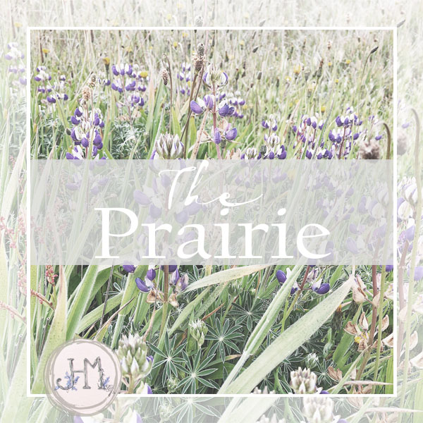 pinterest board cover the prairie.jpg