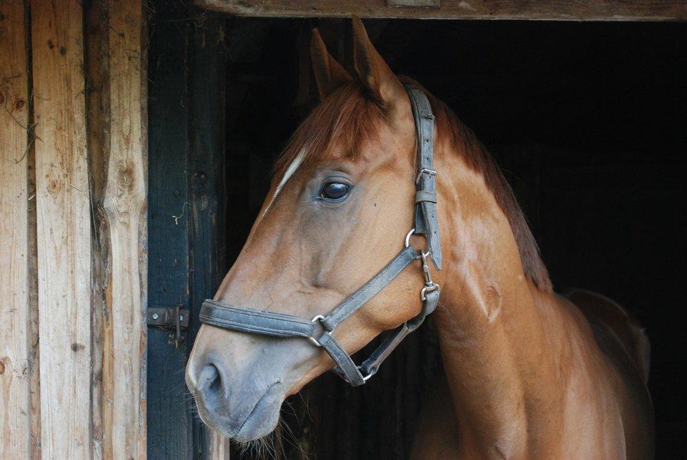 """"""" The Horse """" by kroppek_pl via Pixabay ( Public Domain CC 2.0 )"""