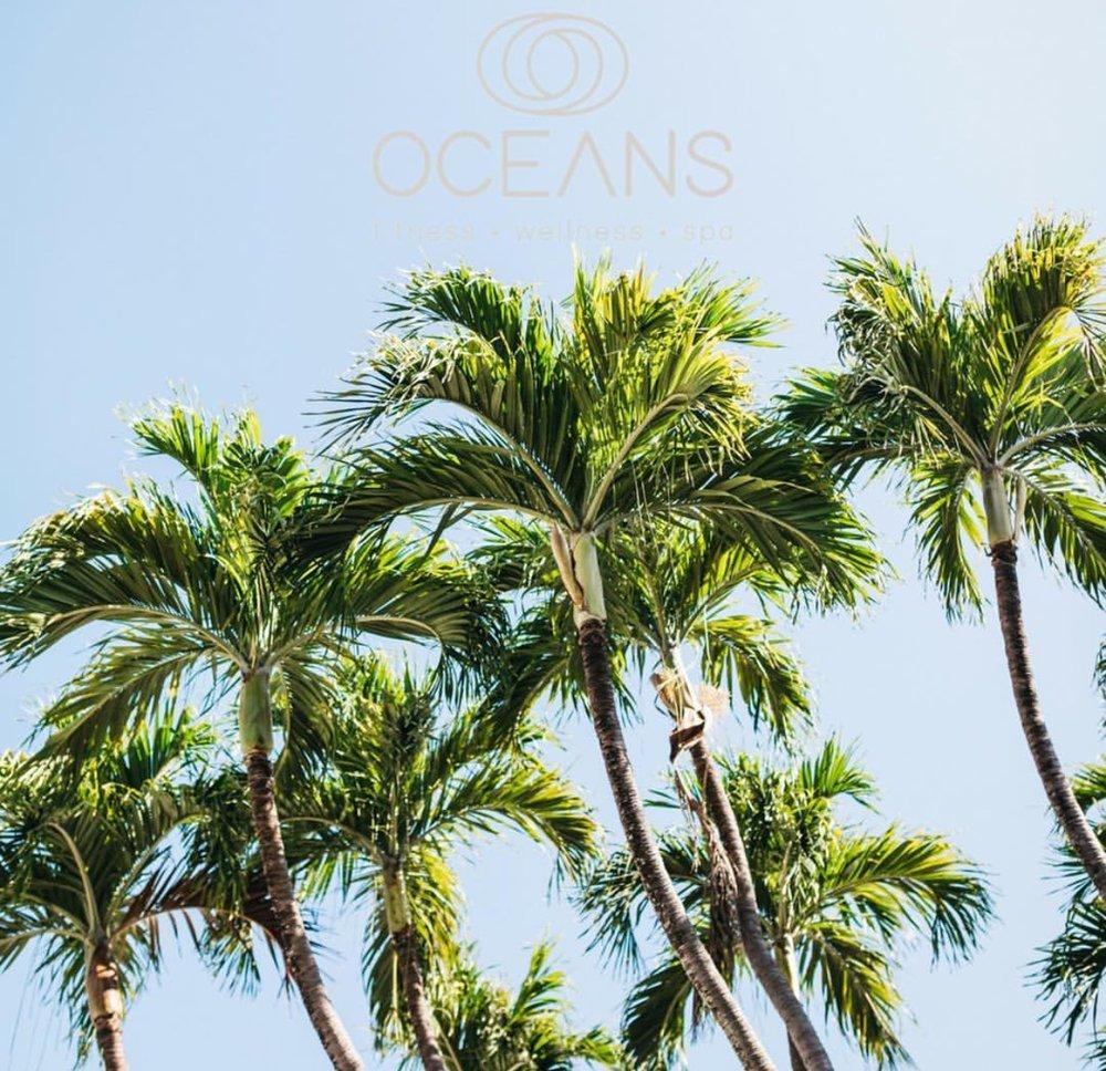 palm tree oceans.jpg