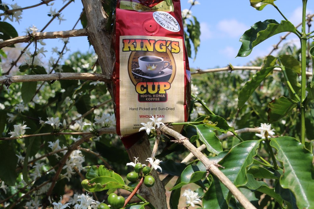 The final result: Our authentic, goumet 100% Kona coffee