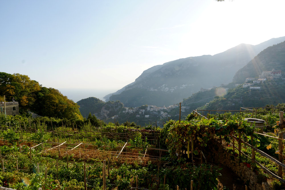 Cliffside gardens