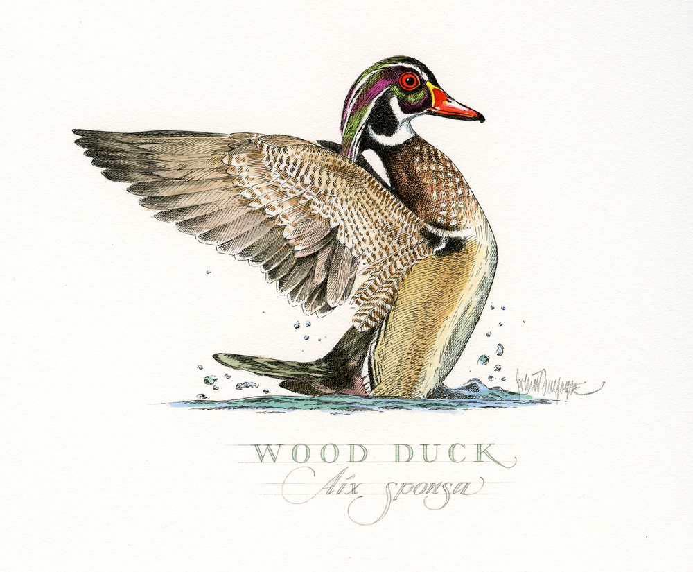 Wood Duck finish wb.jpg