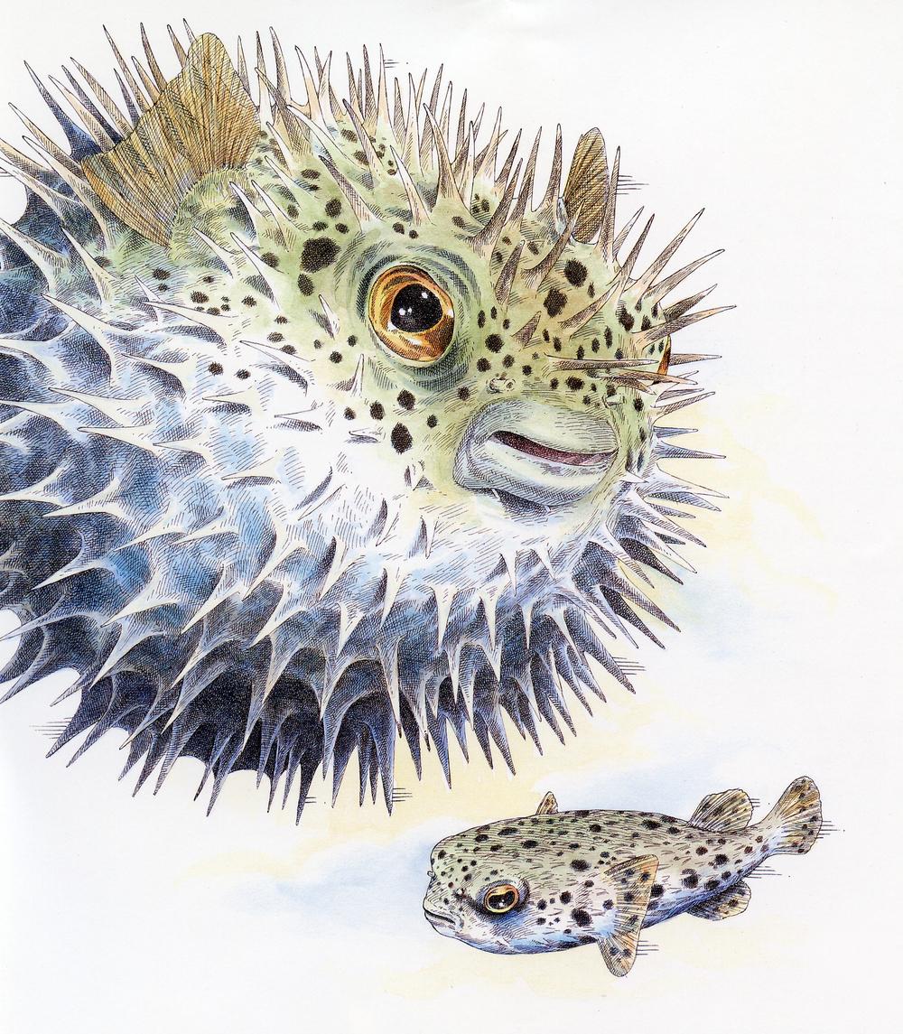 Porcupinefish Stockton Reinsurance.jpg