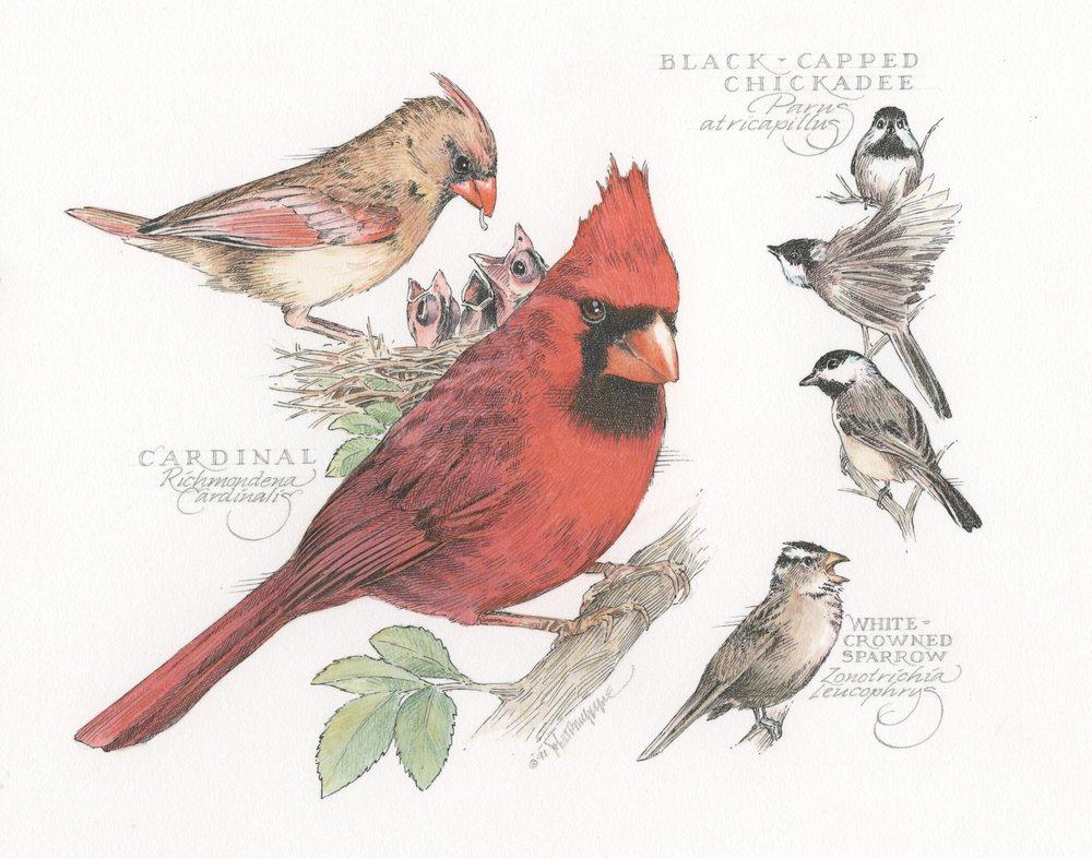 Cardinal finish007.jpg