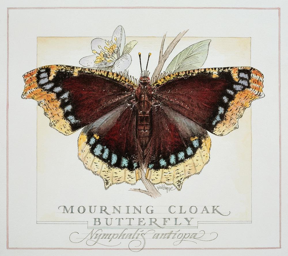 butterfly wb.jpg