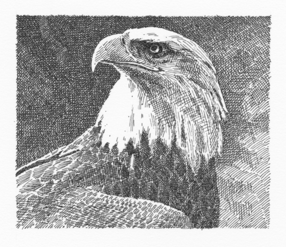 Eagle (grayscale)050.jpg