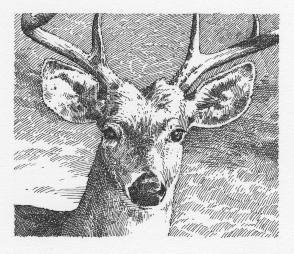 Deer (grayscale)048.jpg