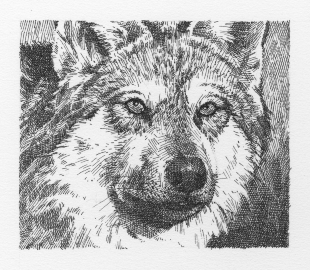 Wolf (grayscale)051.jpg