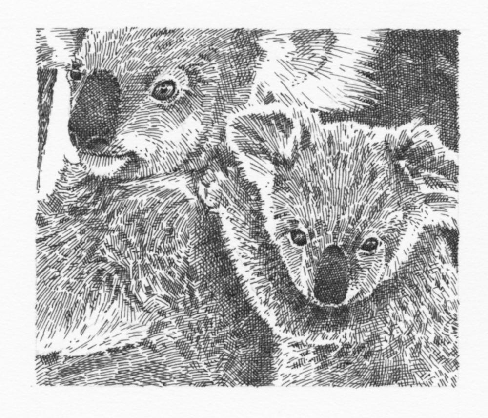 Koala (grayscale)049.jpg