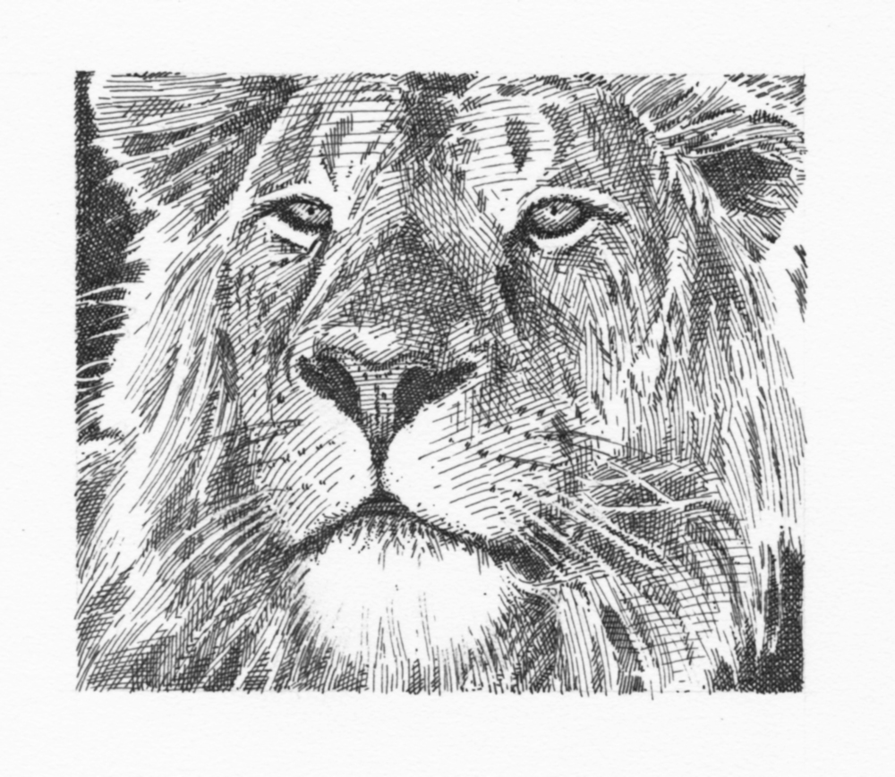lion (grayscale)046.jpg