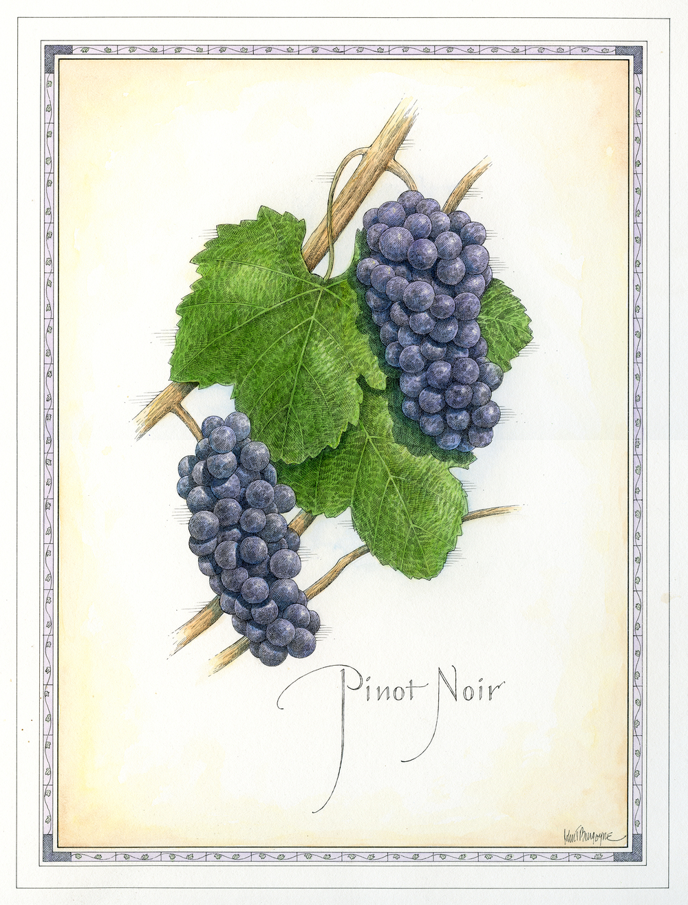 Pinot Noir finish.jpg