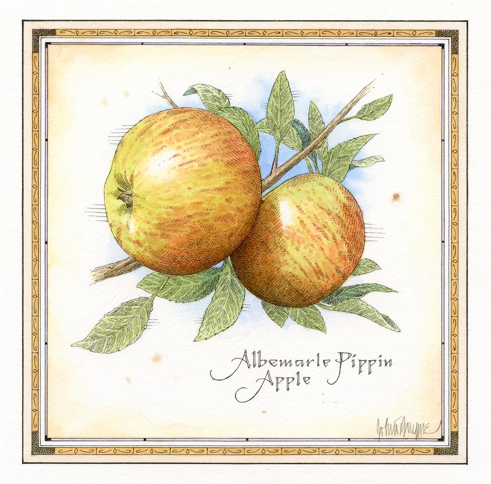Albemarle Pippin Apple finish.jpg