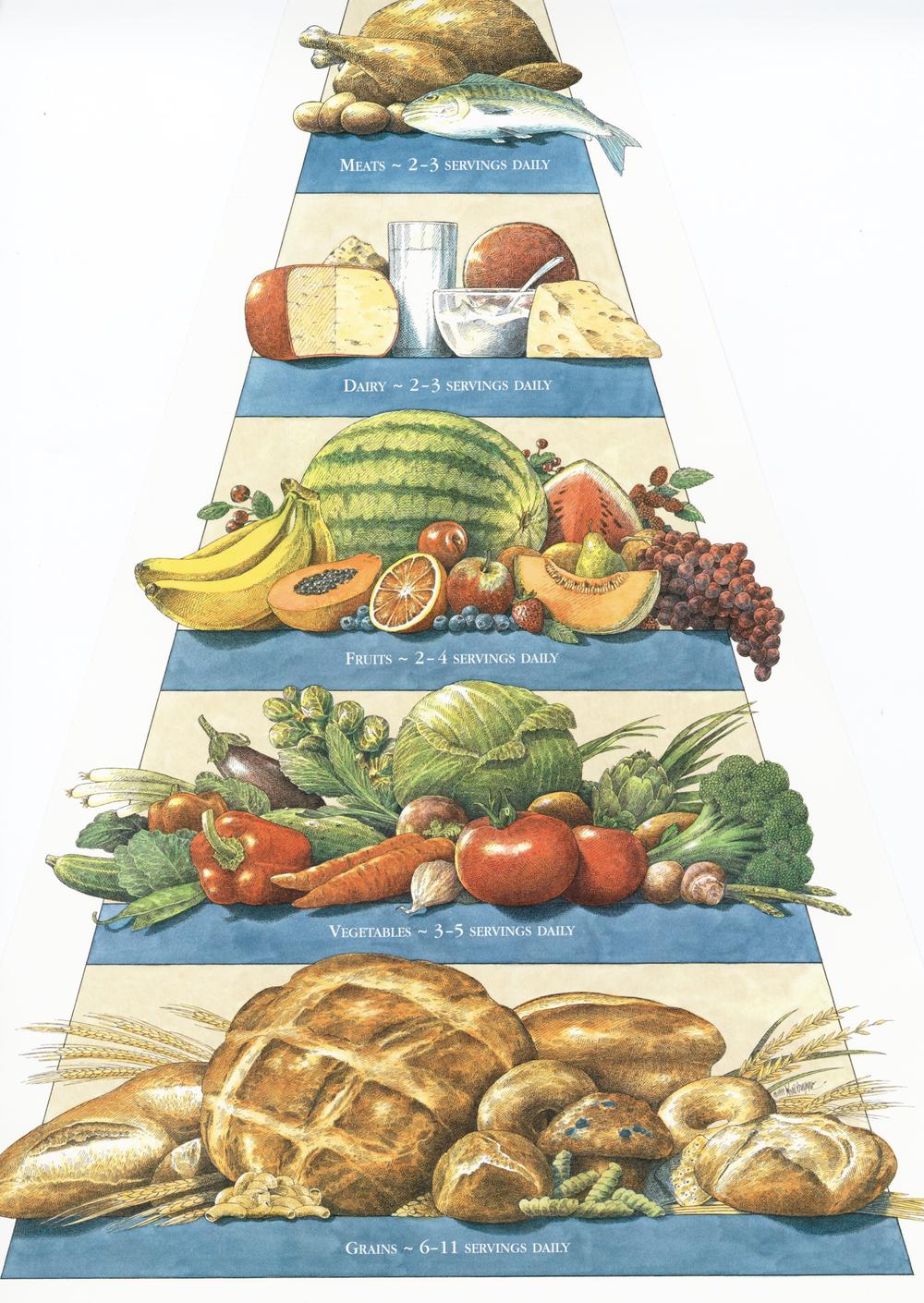 Food Pyramid031.jpg