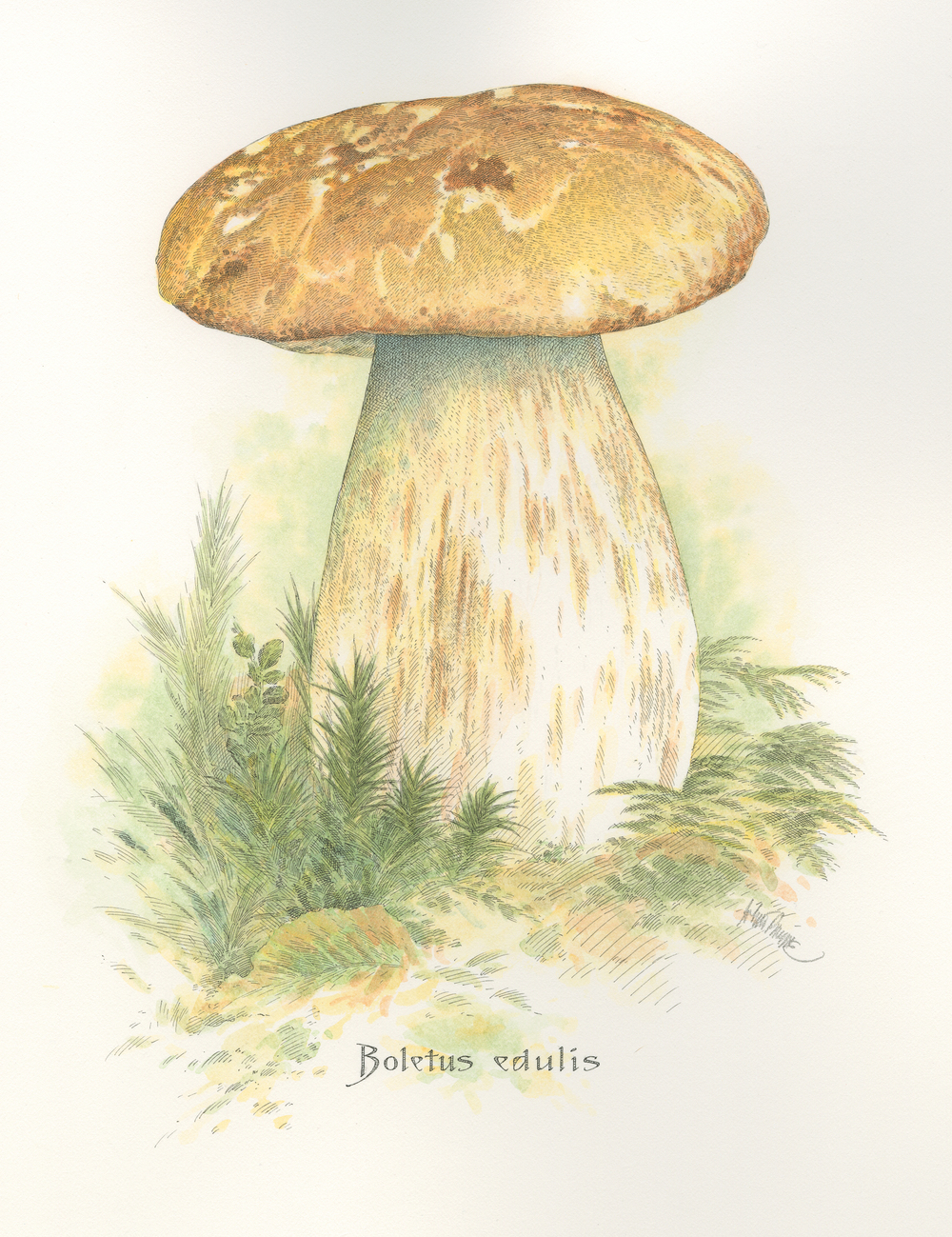 Porcini finish001.jpg