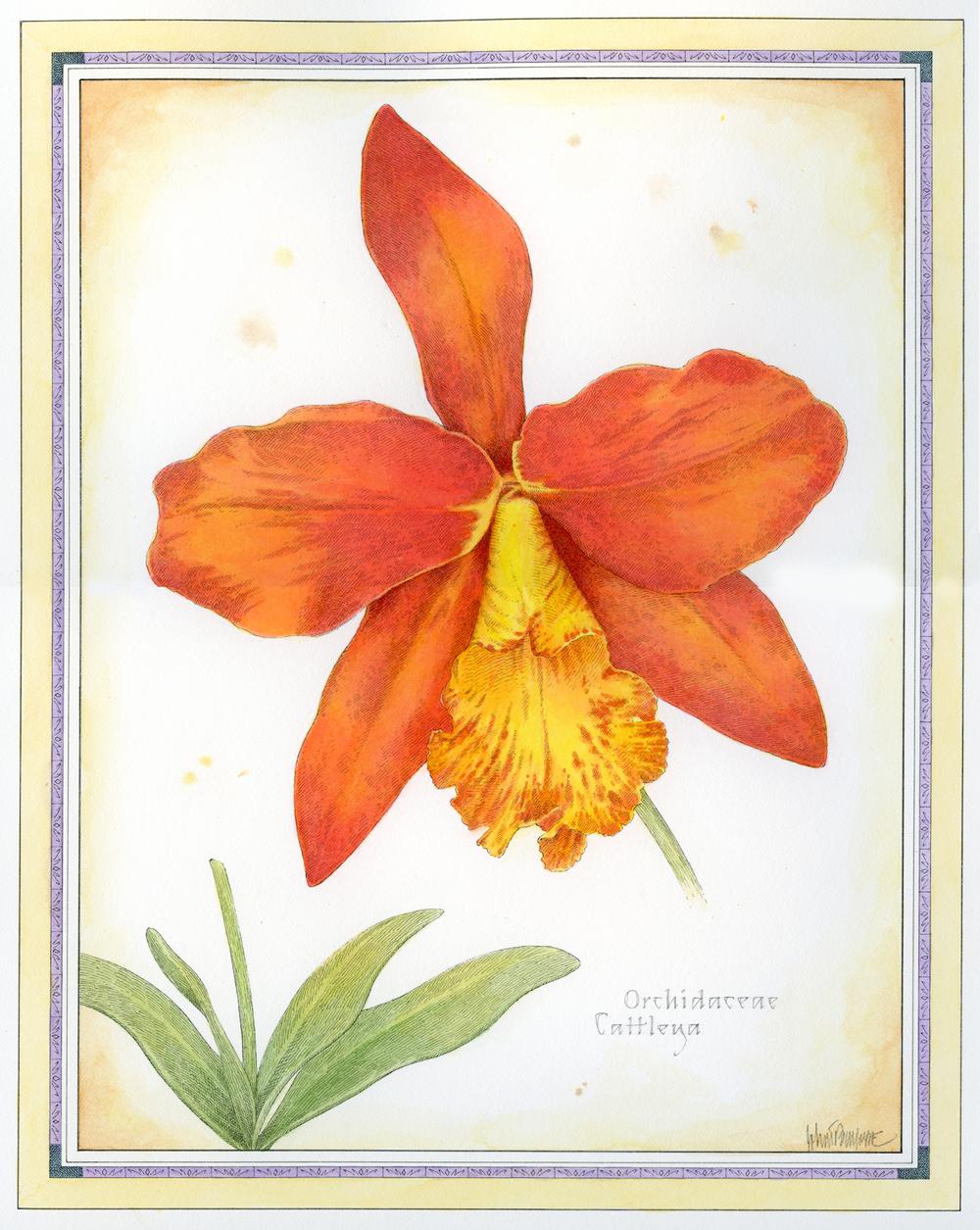 Orange Cattleya.jpg