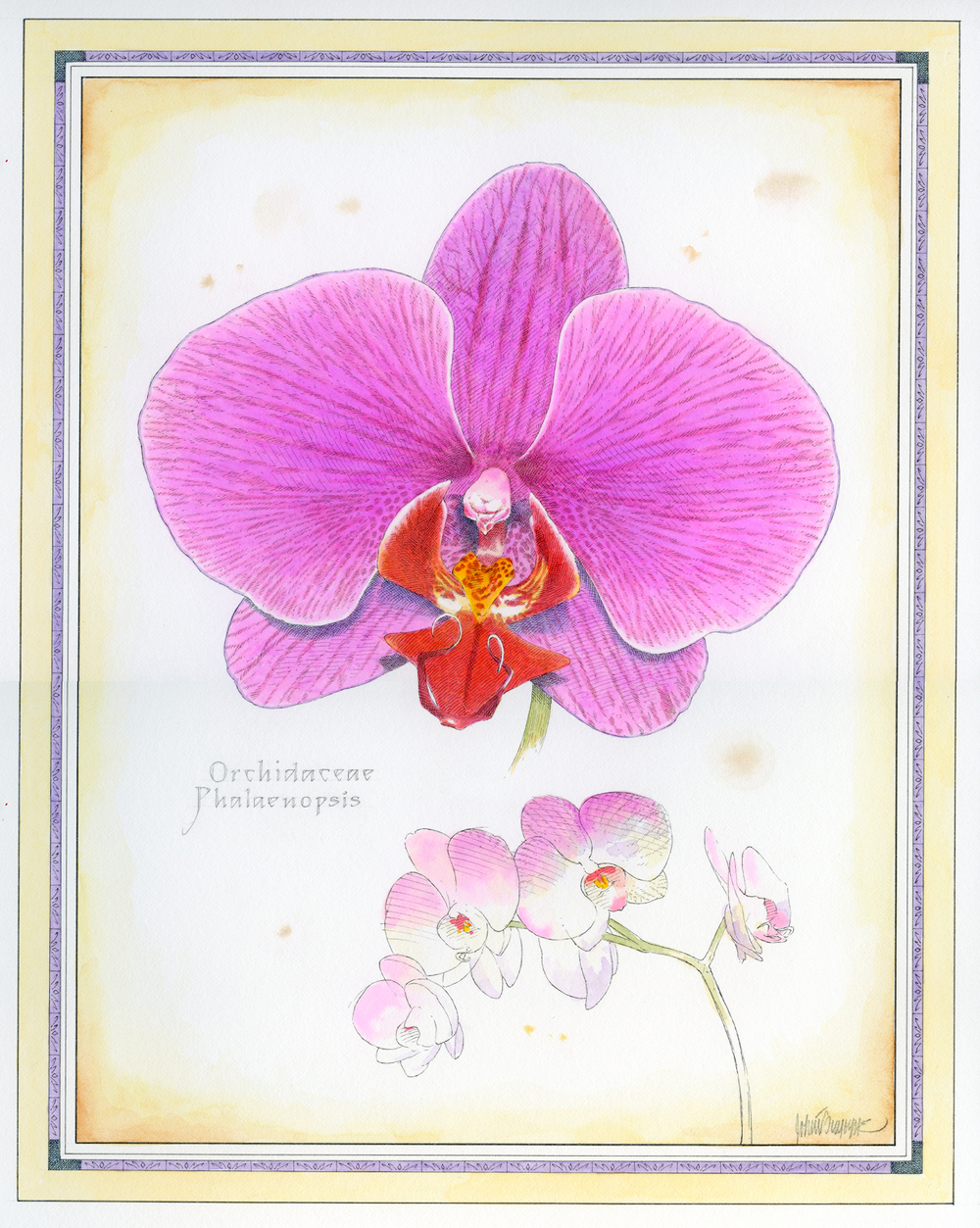 Purple Phalaenopsis finish.jpg