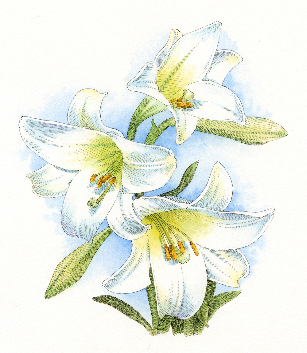 Easter Lily finish.jpg